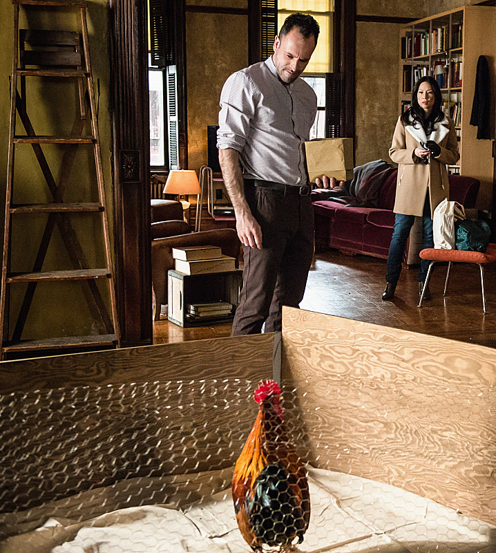 6. Check with your roommate before adopting roosters.