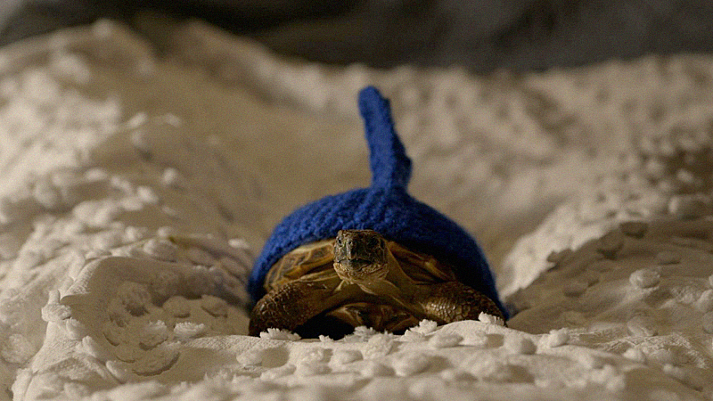 8. Don't use your pet tortoise as an alarm.
